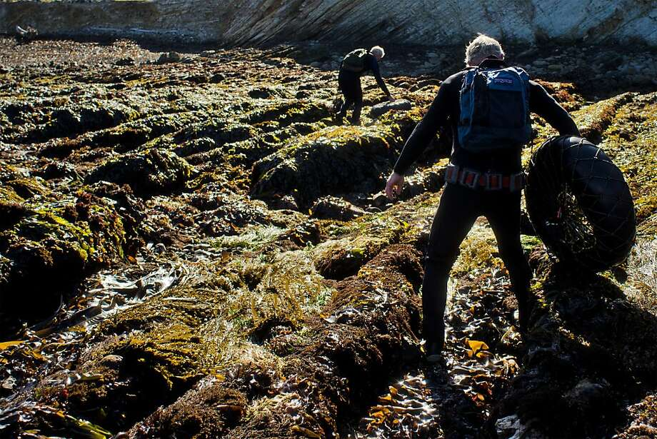 Brothers Richard and Bob Tankersley carefully make their way inland over jagged, kelp-covered rocks after abalone diving at Point Arena, California on June 6, 2012. The Fish and Game Commission will vote Wednesday on whether to establish the northernmost undersea reserve from Point Arena to the Oregon border. Photo: Alvin Jornada, Special To The Chronicle