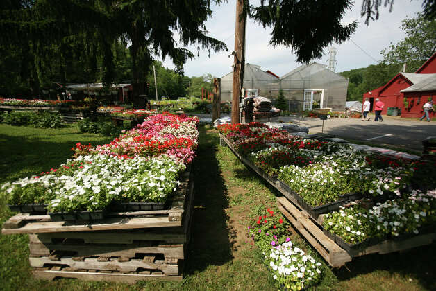 Flats of flowers for sale at Well's Hollow Farm in the Huntington section of Shelton on Sunday, June 10, 2012. Photo: Brian A. Pounds / Connecticut Post