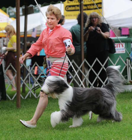 Mary-Elizabeth Simpson of Stamford shows Susan Gold's Bearded Collie named Willoughby during the Greenwich Kennel Club 80th Dog Show at Taylor Farm Park in Norwalk, Saturday, June 9, 2012. Photo: Bob Luckey / Greenwich Time