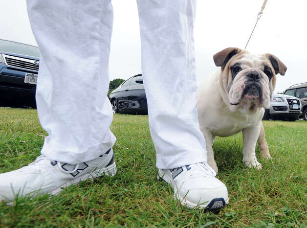 Peter Festa of Long Island, N.Y., and his Bulldog named Casey during the Greenwich Kennel Club 80th Dog Show at Taylor Farm Park in Norwalk, Saturday, June 9, 2012. Photo: Bob Luckey / Greenwich Time