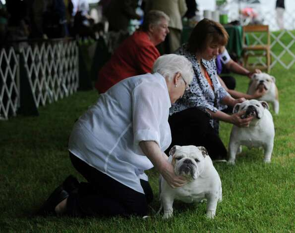 Bulldog judging during the Greenwich Kennel Club 80th Dog Show at Taylor Farm Park in Norwalk, Saturday, June 9, 2012. Photo: Bob Luckey / Greenwich Time