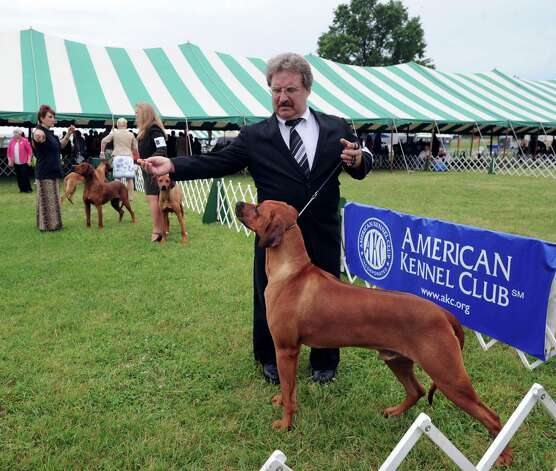 Kent McFarlane of Bethlehem, Conn., and his Rhodesian Ridgeback named Johnny during the Greenwich Kennel Club 80th Dog Show at Taylor Farm Park in Norwalk, Saturday, June 9, 2012. Photo: Bob Luckey / Greenwich Time