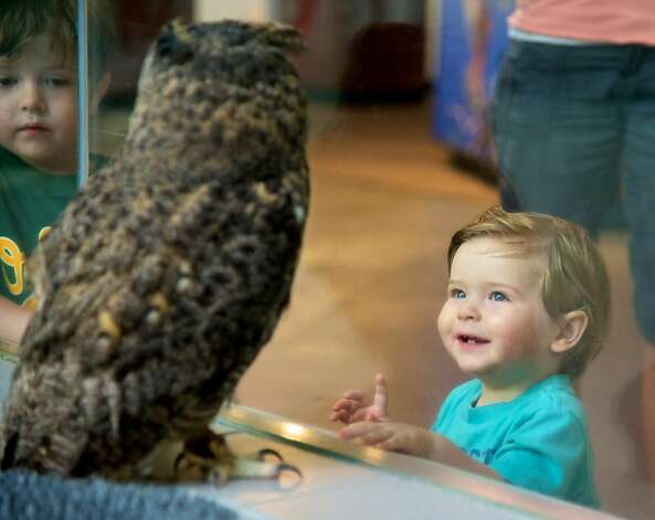 A young boy observing a live great horned owl at the Lindsay Wildlife Museum's exhibit hall. Photo: Lindsay Wildlife Museum