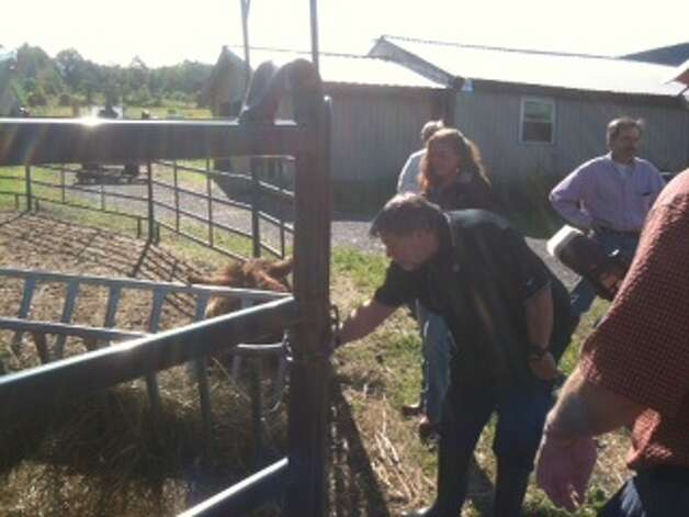 "Apple co-founder Steve Wozniak visits a Rotterdam Junction horse farm to meet a horse, ""Woz,"" that was named after him by the farm's owner. (Bryan Fitzgerald / Times Union)"