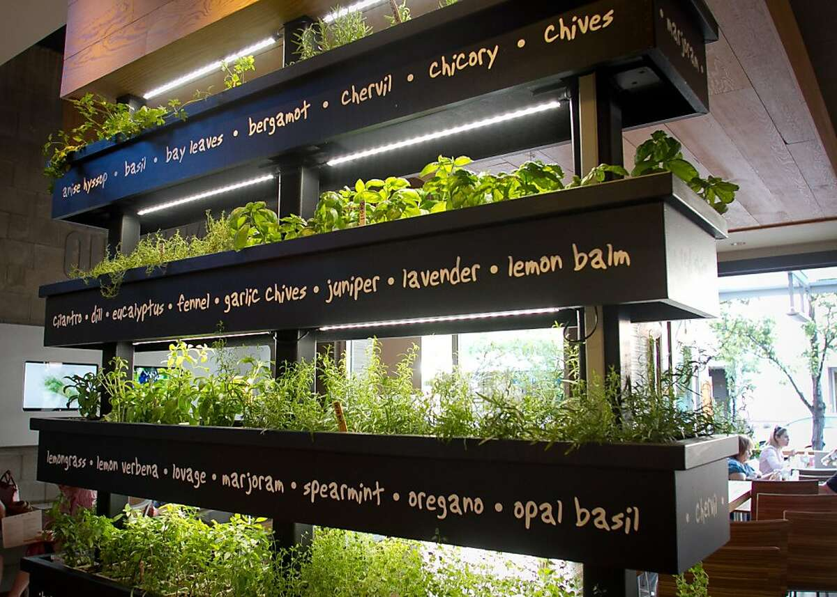 Herbs on display at Lyfe restaurant in Palo Alto, Calif., is seen on Saturday, June 9th, 2012.
