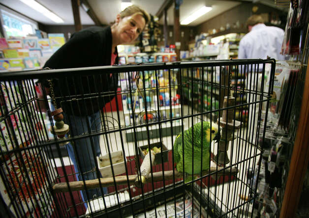 Trish Tweedley of Westport greets Paddy, the talking parrot, at Switzer's Pharmacy in Southport Center on Tuesday, June 5, 2012. Photo: Brian A. Pounds / Connecticut Post