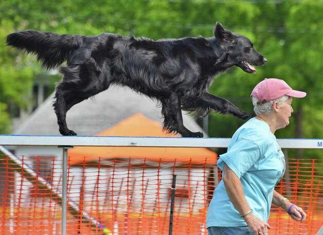 Agility Dog Training Cincinnati