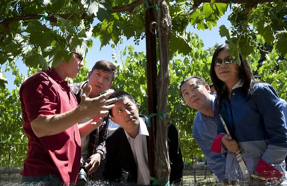 Ron Justice, left, of Sorelle Winery in Lodi, California, explains the process of growing a Sauvignon Blanc grape vine to a business delegation who visited Lodi to find area wineries interested in exporting wine to China, June 8, 2012. Next to Justice from left is, David Hwa of the Dalian Wine Association of Dalian, China, Rex Zhang of the USDA's foreign agriculture services, Tie Zhang of the Gold Coast Wine Group and Shanghai Fantastic International Trading Company, and Dan Gao, right, owner of a manufacturing plant in Shenyang, China. (Lezlie Sterling/Sacramento Bee/MCT) Photo: Lezlie Sterling, McClatchy-Tribune News Service