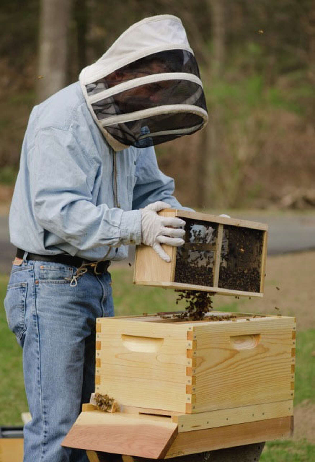 Danbury Fire Lt. Bill Lounsbury unwinds from the stress of his job by keeping honeybees and tending hives for other people who keep them.