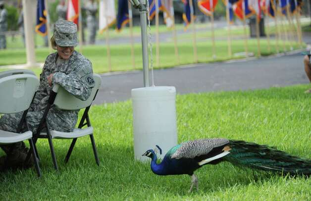 Col. Sharon Wismiewski watches a peacock before the Army's 237th birthday celebration at the Fort Sam Houston Quadrangle on Thursday, June 14, 2012. Photo: Billy Calzada, San Antonio Express-News / © 2012 San Antonio Express-News