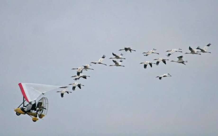 Fly Away Home: A father and daughter work together to save geese. Touching! For kids as young as 8.