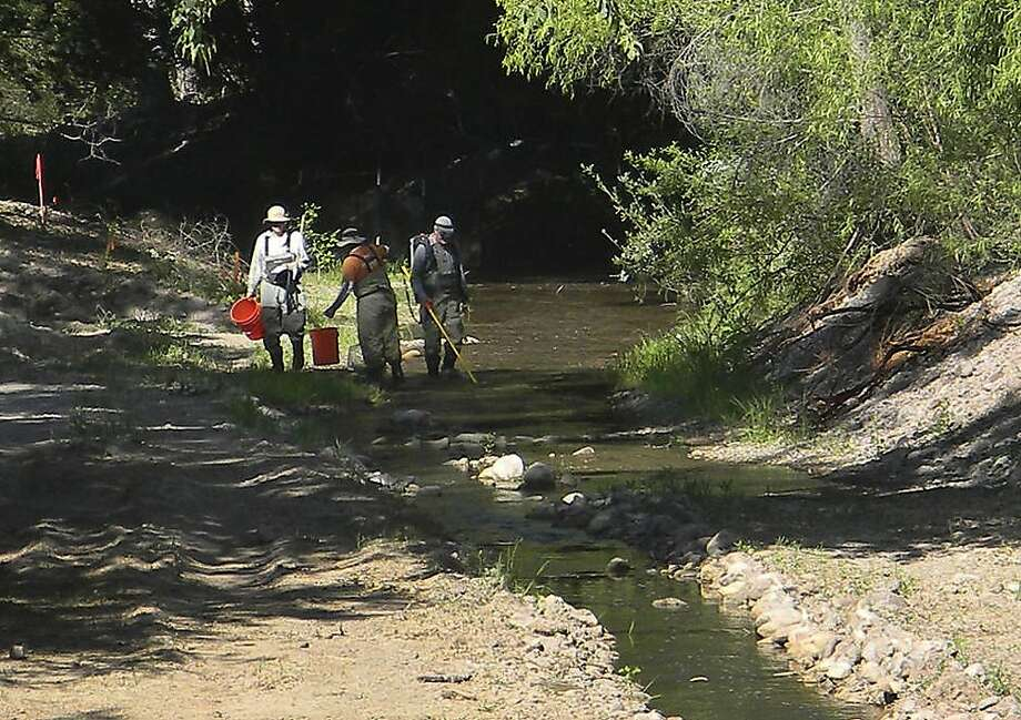 A team of biologists retrieve threatened Gila trout from a stream in the Gila National Forest in New Mexico, in this photo made on Wednesday, June 13, 2012, and made available Thursday by the U.S. Forest Service. The movement of the fish is an effort to save them from the post-fire ravages _ choking floods of ash, soil and charred debris _ that are expected to come with summer rains, in the wake of the largest fire in state history. (AP Photo/U.S. Forest Service, KC Shedden) Photo: KC Shedden, Associated Press