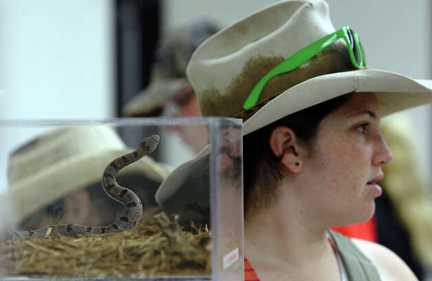 A San Luis Potosi rock rattlesnake is seen in an exhibit as Erin Bamford of Midland visits Herpathon 2012 in Sanderson, Texas on Saturday, June 16, 2012. Over 100 people gathered in Sanderson, Texas for Herpathon 2012 or Snake Days. The meeting featured presentations by herpetology experts and also had snake hunts throughout the West Texas region. Hobbyists and collectors from all around the country came to take part in the event which has been around since the 1970s according to kingsnake.com's Jeff Barringer. Photo: Kin Man Hui, San Antonio Express-News / @2012 San Antonio Express-News