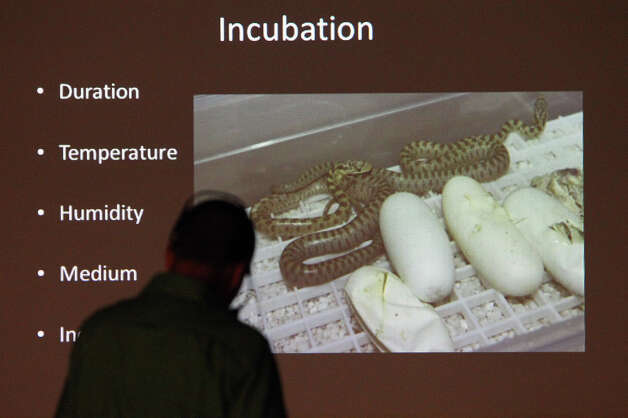 "Southwestern Center for Herpetological Research's Toby Brock gives a presentation at Herpathon 2012 entitled ""Husbandry and Captive Breeding of the Northern Green Rat Snake"" on Saturday, June 16, 2012. Over 100 people gathered in Sanderson, Texas for Herpathon 2012 or Snake Days. The meeting featured presentations by herpetology experts and also had snake hunts throughout the West Texas region. Hobbyists and collectors from all around the country came to take part in the event which has been around since the 1970s according to kingsnake.com's Jeff Barringer. Photo: Kin Man Hui, San Antonio Express-News / @2012 San Antonio Express-News"
