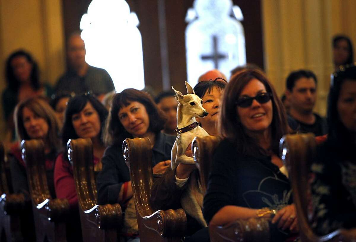 Animal owners fill the pews with their pets at the annual Blessing of the Animals at The Shrine of Saint Francis of Assisi during the North Beach Festival in San Francisco, Calif., Sunday, June 17, 2012.