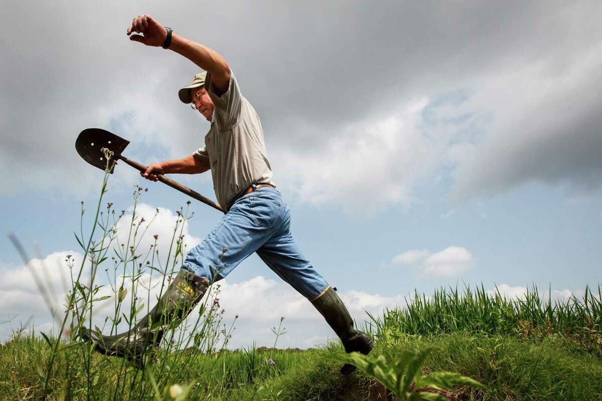 L.G. Raun jumps over a water box and onto a levee while checking his rice crop at his farm last week in El Campo. He is among about 700 rice farmers in Texas.