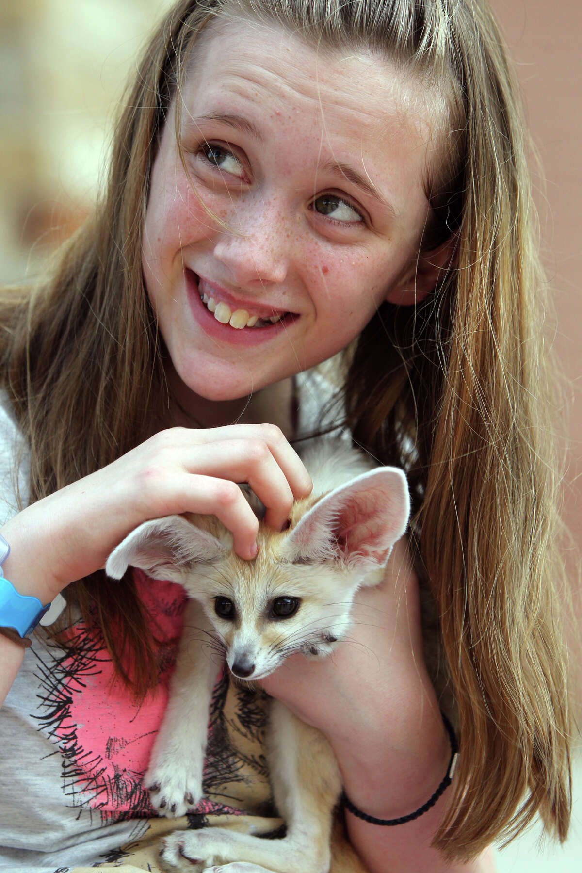 Abbey Paulson, 12, cuddles with a fennec fox Wednesday, June 20, 2012, at Morgan's Wonderland during a special presentation by Zoofari Animal Outreach. The fennec fox is a small nocturnal fox found in north Africa with large ears that help it dissipate heat.