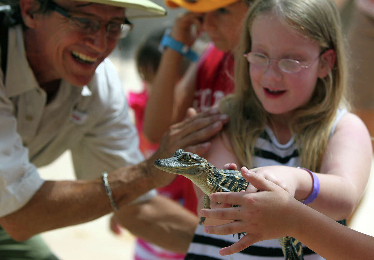 Steve Provost (left) introduces Kalyn Hall, 8, (right) to an American alligator Wednesday, June 20, 2012, during a special presentation of Zoofari Animal Outreach at Morgan's Wonderland. The show allows visitors to mingle with exotic and common animals.