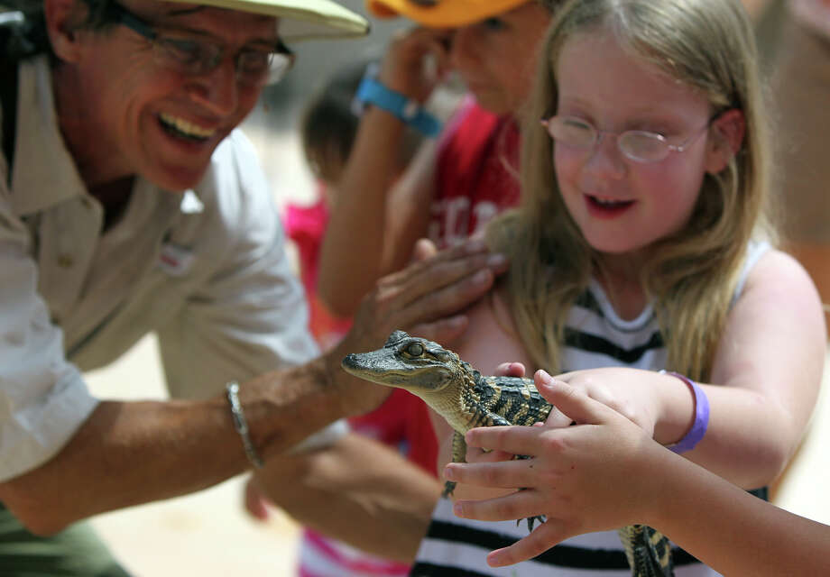 Steve Provost (left) introduces Kalyn Hall, 8, (right) to an American alligator Wednesday, June 20, 2012, during a special presentation of Zoofari Animal Outreach at Morgan's Wonderland. The show allows visitors to mingle with exotic and common animals. Photo: John Davenport,  San Antonio Express-News