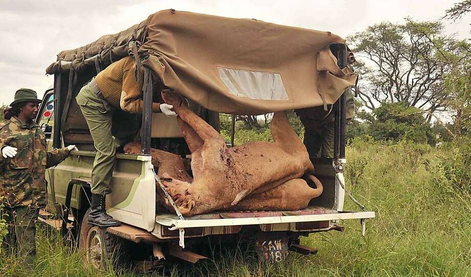 "A picture released by Kenya Wildlife Service (KWS) shows KWS rangers loading onto their vehicle one of the six lions speared to death by residents of the Oloika area in Kitengela, Kajiado County, on June 20, 2012. The retaliatory killing of two adult lionesses, two sub adults and two cubs on the outskirts of Nairobi occurred after the carnivores had invaded a boma and killed four goats.  RESTRICTED TO EDITORIAL USE - MANDATORY CREDIT AFP PHOTO /KENYA WILDLIFE SERVICE - KWS / DENNIS KIBET"" - NO MARKETING NO ADVERTISING CAMPAIGNS - DISTRIBUTED AS A SERVICE TO CLIENTSDENNIS KIBET/AFP/GettyImages Photo: Dennis Kibet, AFP/Getty Images"