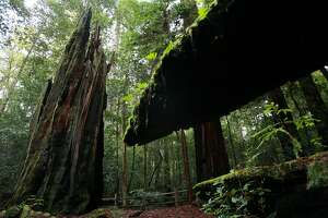 Sunday drive to Portola Redwoods State Park - Photo