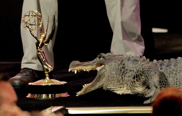 An alligator moves toward a Daytime Emmy statuette at the 39th Annual Daytime Emmy Awards at the Beverly Hilton Hotel on Saturday, June 23, 2012, in Beverly Hills, Calif. Photo: CHRIS PIZZELLO/INVISION/AP