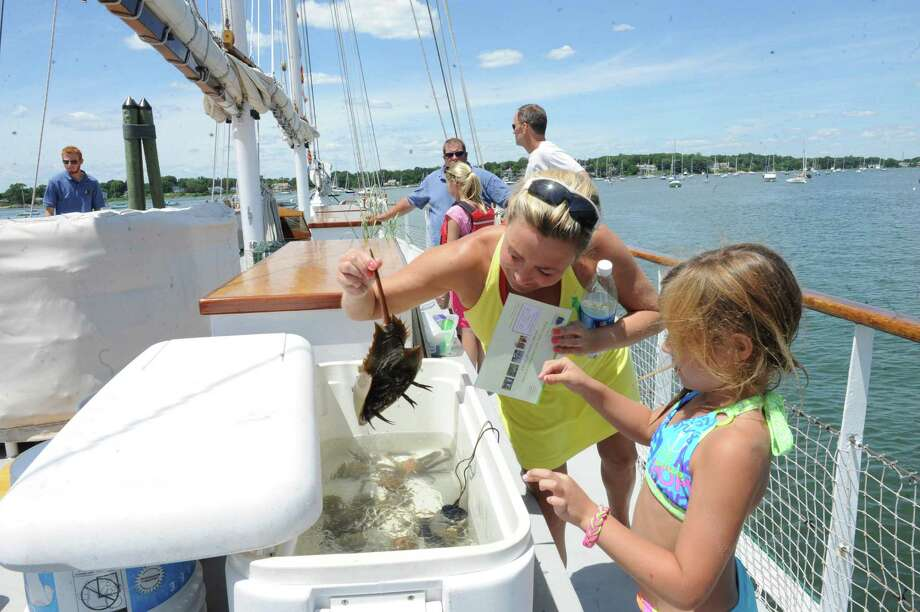 Kristina Sheehan holds a crab for her daughter Kendle Giordano, 7, aboard the SoundWaters schooner, which was tied to the Old Greenwich Yacht Club's dock, during Experience the Sound Sunday, June 24, 2012. The sixth annual event was held by the Greenwich Shellfish Commission to coincide with the opening of the Bruce Museum's Seaside Center at the Innis Arden Cottage at Greenwich Point. Photo: Helen Neafsey / Greenwich Time