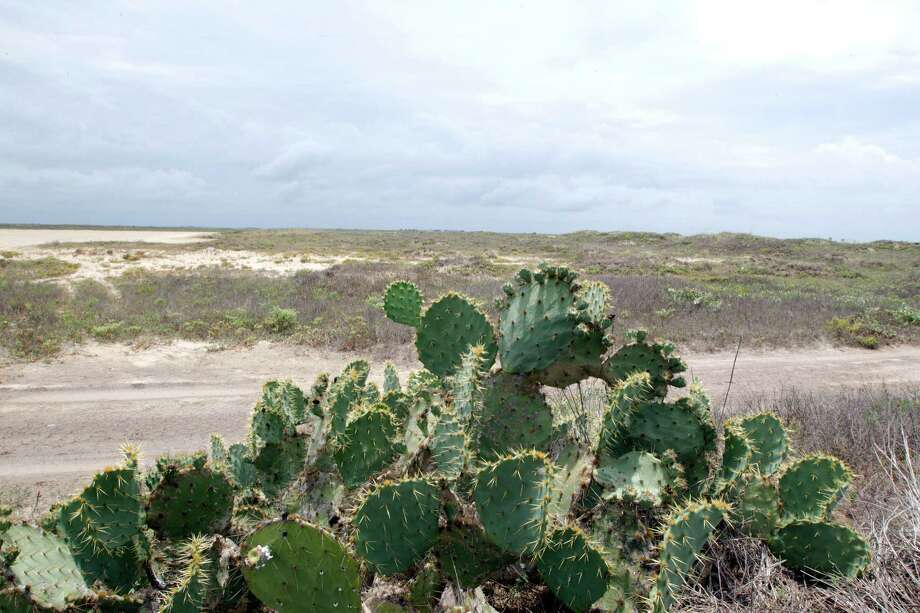 Presently, cactus and sand dominate the proposed site for SpaceX spaceport at Boca Chica Beach on the South Texas coast. Photo: James Nielsen / © Houston Chronicle 2012