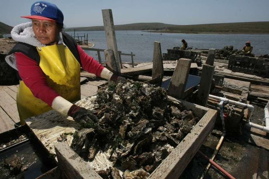 Go straight to the source for oysters (Drakes Bay oyster beds). (Michael Macor / The Chronicle)