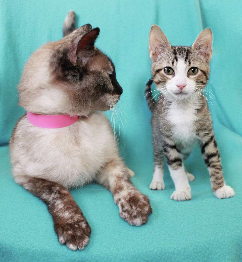 Helen, left, and Rhody are looking for loving homes. Photo: San Antonio Humane Society