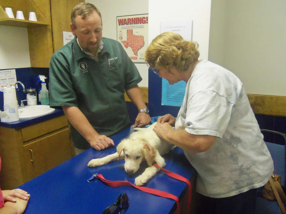Dr. Dusty Taff and Donna Armstrong with Fain and Smathers Veternary Hospital check over the small dog with severe burns. Photo: Courtesy Photo