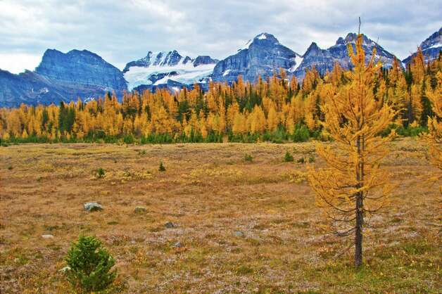 Larch Valley is one of the more popular hikes around Banff. A steep climb from Moraine Lake puts you in the alpine meadow, surrounded by mountains. Photo: Joshua Trudell, For The Express-News