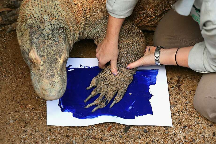 SYDNEY, AUSTRALIA - JUNE 27:  'Tuka' the komodo dragon leaves a paint print on a canvas at Taronga Zoo on June 27, 2012 in Sydney, Australia. Taronga and Western Plains Zoo today pledged a a new elephant conservation project in Thailand and animals at Taronga made their pledge by dipping their feet and hands in paint and smudging them on canvas.  (Photo by Cameron Spencer/Getty Images) Photo: Cameron Spencer, Getty Images