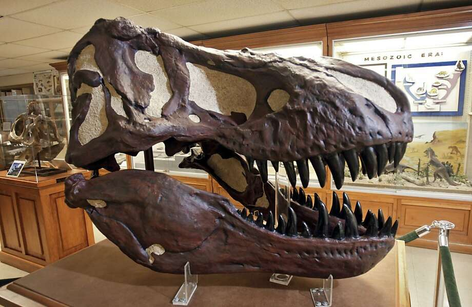 Dinosaurs were warm blooded new paper reports sfgate Dinosaur museum ohio