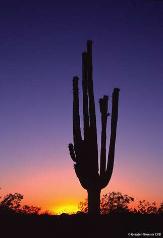 Many activities and tours are available in the desert after sunset. Photo: Greater Phoenix CVB, © Greater Phoenix CVB