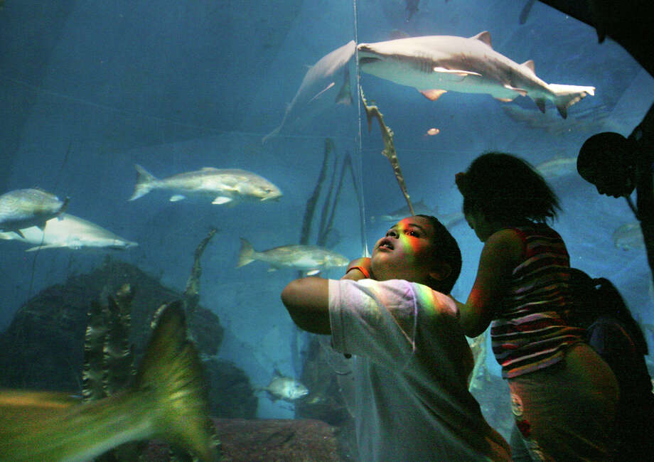 Connecticut has a wide variety of animal residents:Talk to shark divers at the Maritime Aquarium in Norwalk. Mystic Aquarium is home to New England's only beluga whales.Connecticut's only zoo is in Bridgeport.  Photo: Brian A. Pounds / Connecticut Post