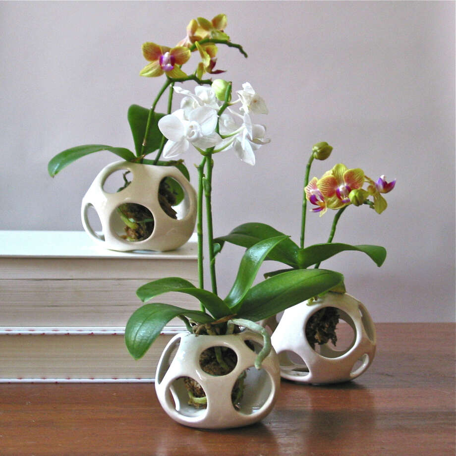 March: If you have indoor plants, dust the leaves and clean the floor or shelves under the pots. If you really love your plants, bring them into the shower and lightly rinse them. It's easy for indoor plants to get dusty and dry during the winter months. Photo: Iloveairpods.com