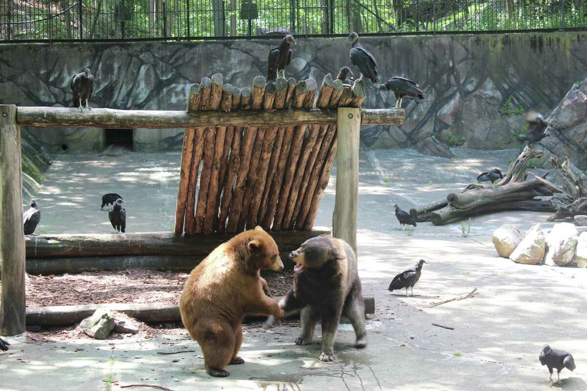 Trailside Museums & Zoo in Bear Mountain, N.Y., is an inexpensive way to introduce kids to nature. Admission is a suggested $1. (Photo by Donna Liquori)