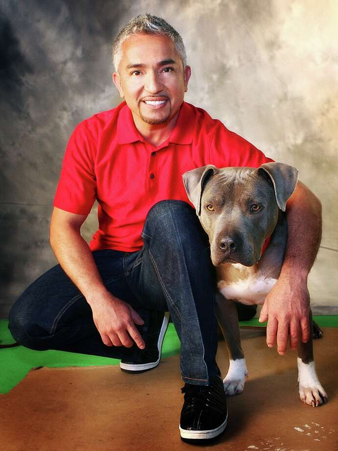 "The ""Dog Whisperer"" Cesar Millan uses this day to promote taking care of dogs with a little poem that goes ""Roses are RED, the code is RED too. Get collars, leashes and treats for your doggy from you."" / DirectToArchive"