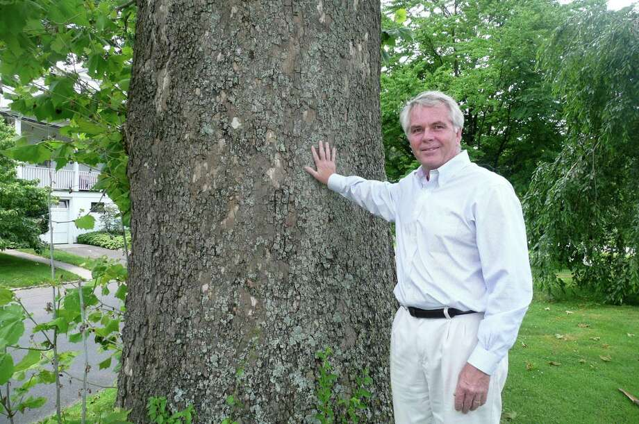 Town Tree Warden Bruce Spaman shows the impressive girth of a 100-year-old sycamore tree in Bruce Park that has made the cut in his notable tree search. Photo: Anne W. Semmes