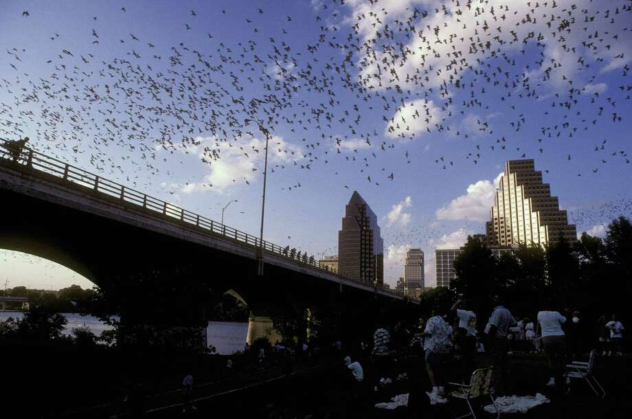 Nearly 2 million Mexican free-tailed bats emerge from the Congress Avenue Bridge at sunset.  Photo: Merlin D. Tuttle, Bat Conservation International, / Handout email