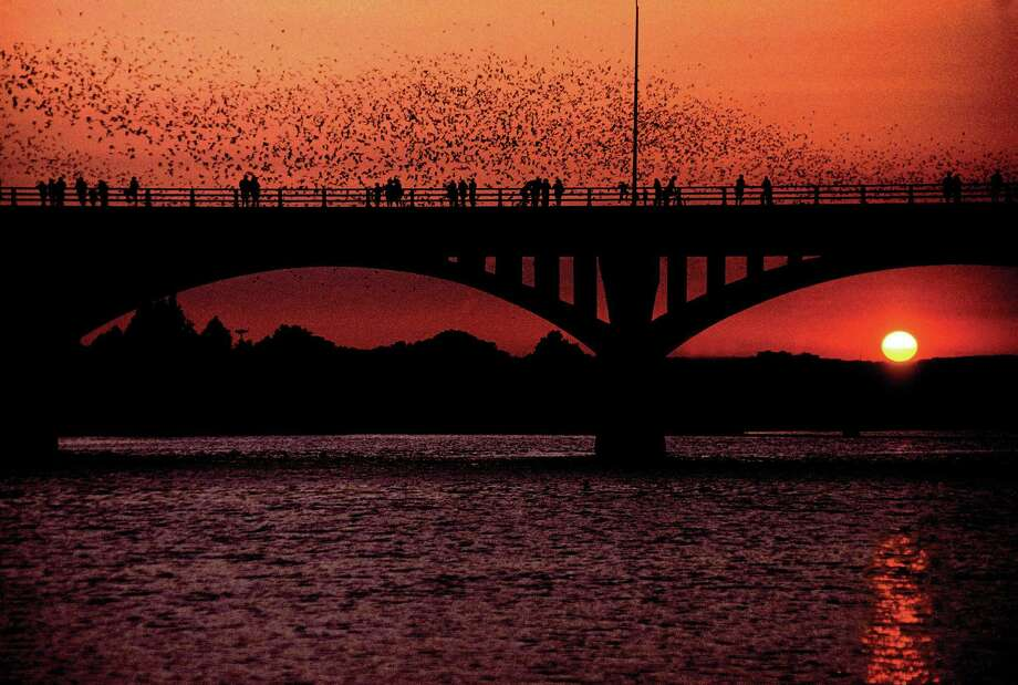 Bats emerge from the Congress Avenue bridge in Austin. Photo: Karen Marks, Bat Conservation International, / handout