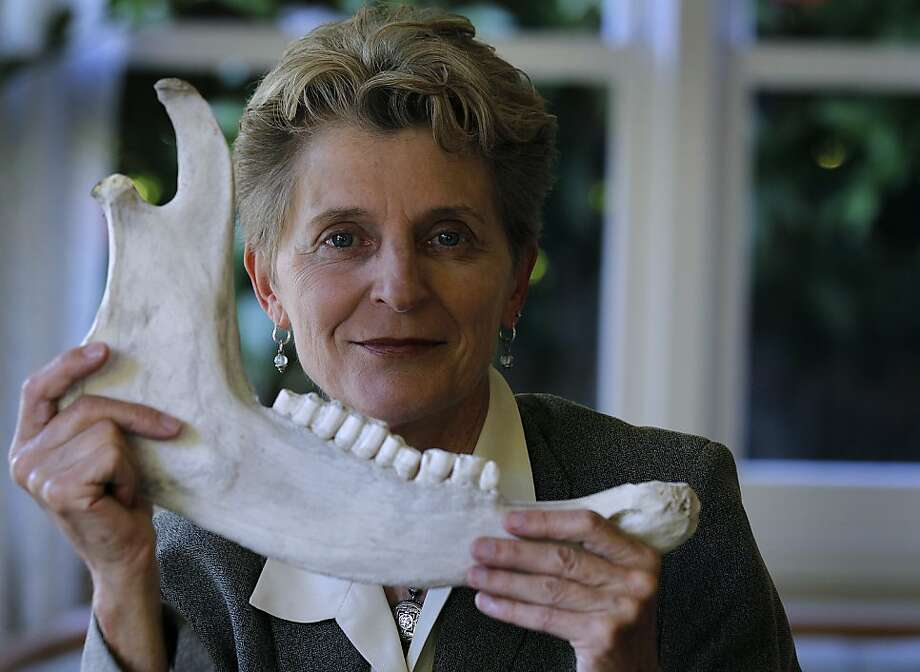 Chiropractor Lani Simpson holds a bovine jawbone at her home in Berkeley, Calif. on Thursday, June 7, 2012. Simpson is a leading expert on osteoporosis, a condition which causes bones to become brittle and fragile. Photo: Paul Chinn, The Chronicle