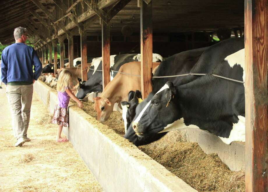 Children like to visit Rushton Farm outside of Grafton for a close-up view of milk cows, and an ice cream cone from The Scoop shack at the farm's entrance. Photo: Kathleen Scott, For The Express-News