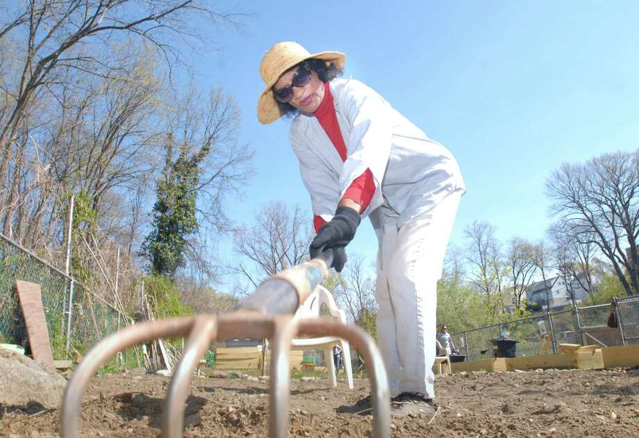 Armstrong Court resident Jessie Ramnath uses a hoe to break up the soil at the Armstrong Court Community Garden in Chickahominy this spring. Gardeners and volunteers gathered together to start the process of opening the garden for the season. Photo: Bob Luckey / Greenwich Time