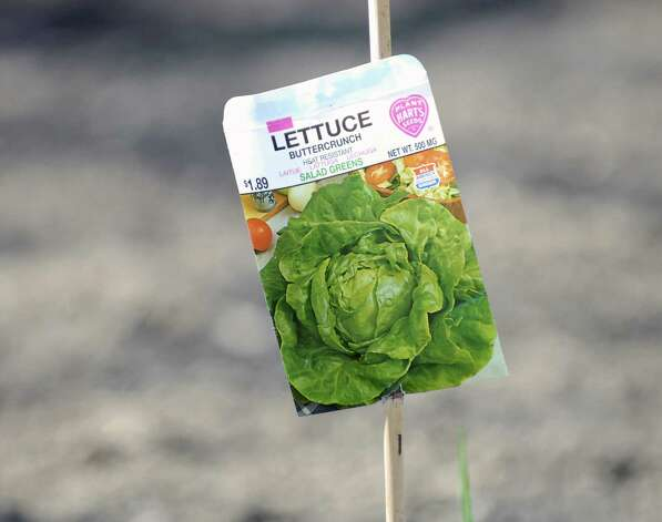 A seed packet of buttercrunch lettuce on a wooden marking stick at the Armstrong Court Community Garden in Chickahominy this spring. Gardeners and volunteers gathered together to start the process of opening the garden for the season. Photo: Bob Luckey / Greenwich Time