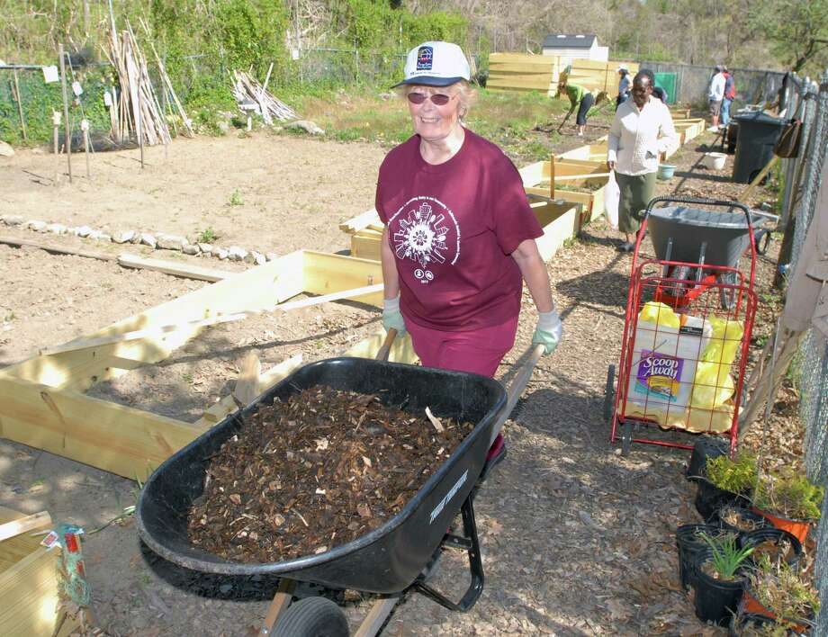 Volunteer Helma Varga of Greenwich pushes a wheelbarrow filled with wood chips at the Armstrong Court Community Garden in Chickahominy this spring. Gardeners and volunteers gathered together to start the process of opening the garden for the season. Photo: Bob Luckey / Greenwich Time
