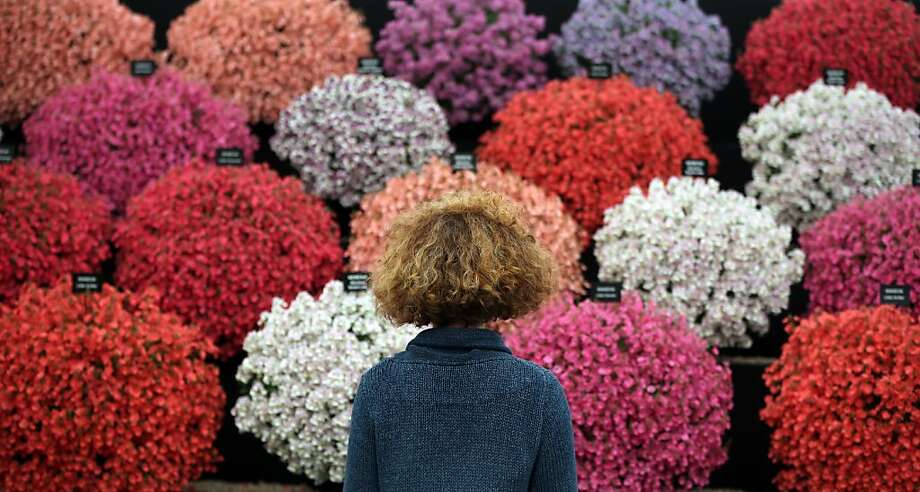 Similar styles: A visitor is attracted to the bushy blooms of the