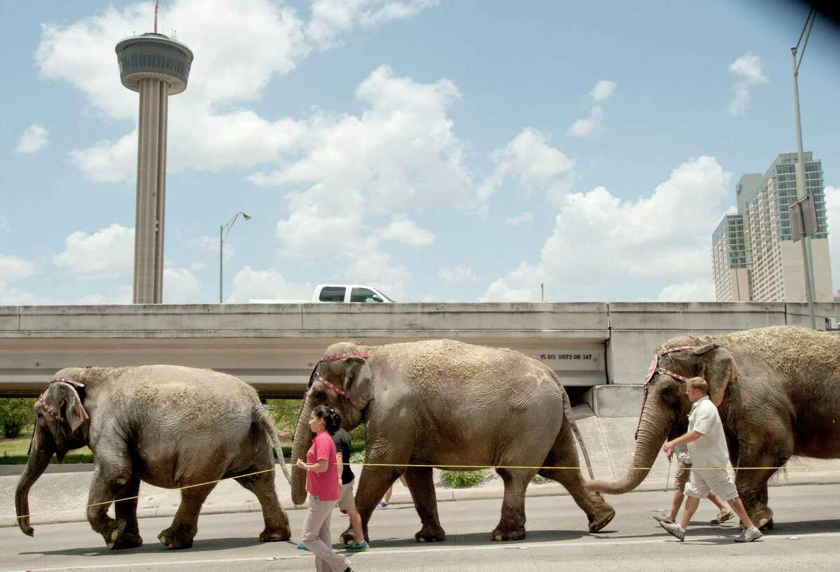Elephants of the Ringling Bros. and Barnum & Bailey Circus walk down the McAllister Freeway access road on their way to the Alamodome, Tuesday, July 3, 2012, in San Antonio.