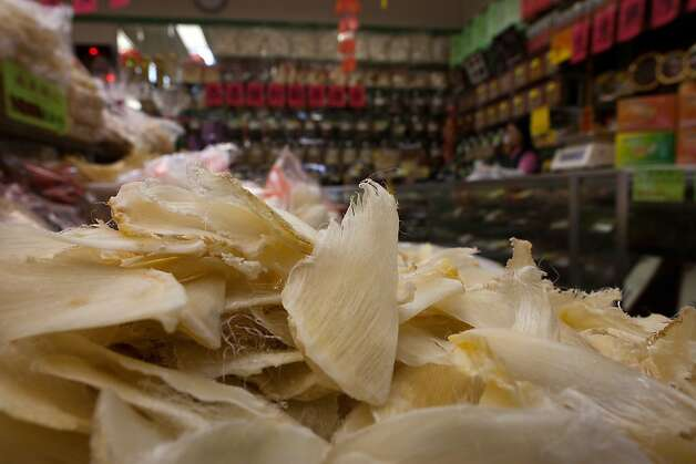 Shark fins on sale at the Stockton Seafood Center, Inc., in Chinatown on February 14, 2011 in San Francisco Calif.  Photograph by David Paul Morris/Special to the Chronicle Photo: David Paul Morris, Special To The Chronicle